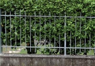 recinzione-modulare-la-quadra